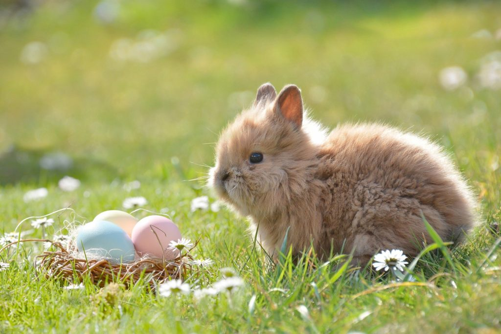 Baby rabbit with eggs in a basket to symbolise the Easter break